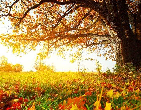 Фотообои дерево для детской комнаты позволят создать в ней светлую спокойную атмосферу