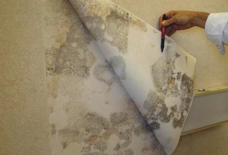 На фото показано образование плесневого грибка на стене при несоблюдении правил при оклейке полотен.