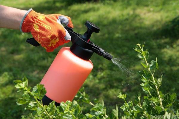 Применение пульверизатора для опрыскивания растений