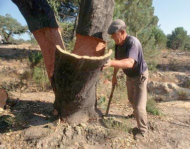 Пробковые обои делают из коры португальского дуба.