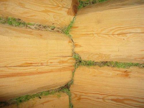 Стены сруба законопаченные мхом