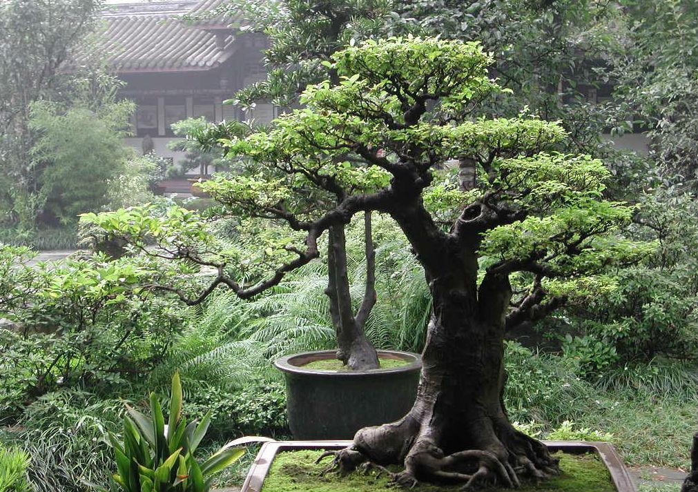 Умиротворяющие обои японский сад
