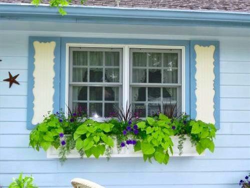 Выбор, какой краской покрасить старый деревянный дом снаружи, зависит и от общего его оформления – такая зелень на подоконнике требует предельного внимания к защитным свойствам краски